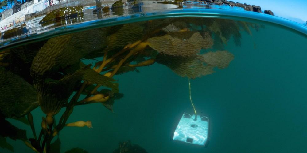 trident-under-kelp1