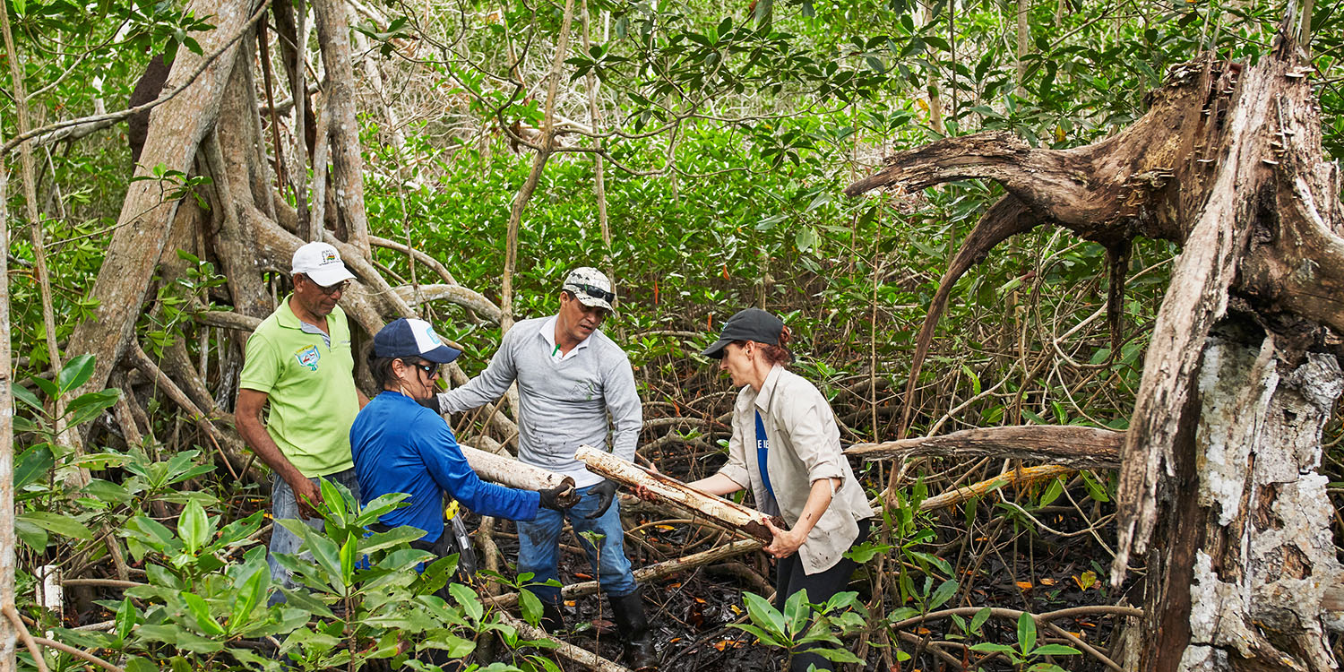 On Earth Day, Apple reports back on its mangrove restoration project to absorb carbon