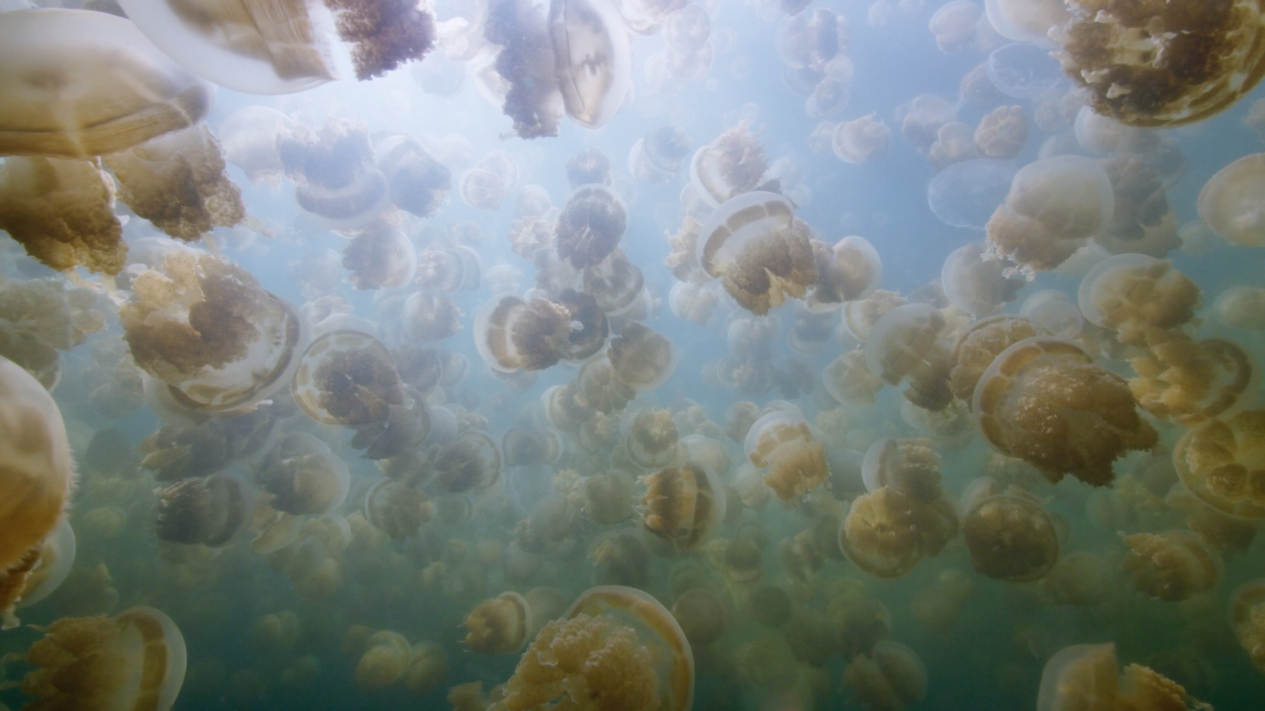 Apple Tv Now Features 10 Beautiful Underwater Video Screensavers 9to5mac