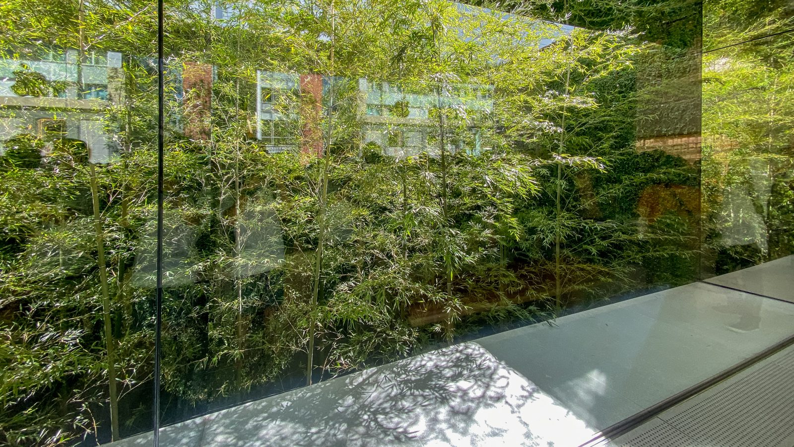All-new Apple Fukuoka opens with Japanese shoji screen and bamboo garden